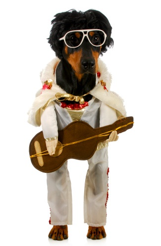 Standing Dog Elvis with Guitar
