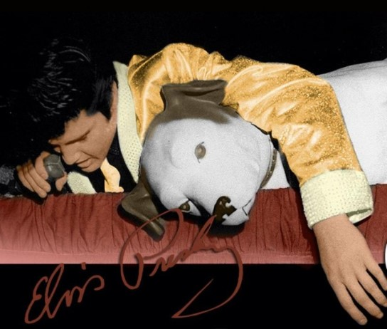 Elvis Laying Next to Nipper