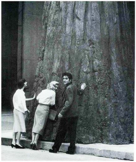 Elvis at Base of Huge Tree