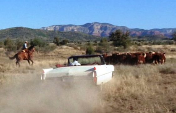 Stay Away Joe - Elvis Herding Cattle with a Cadillac