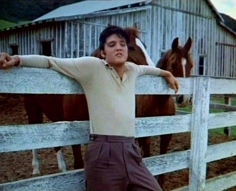 Elvis and Horses