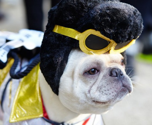 100 Genius Costumes Elvis Dog