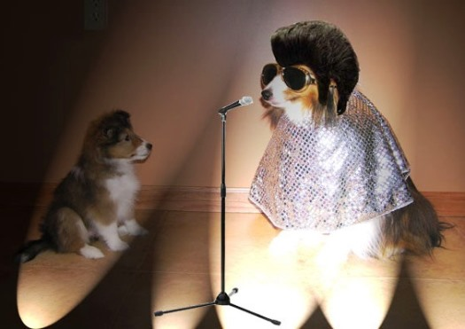 Dog in Elvis Costume in front of Mic